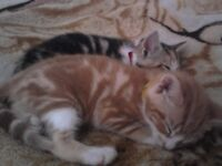 2 house cats free to good home