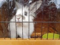 5 month old rabbit with outdoor hutch and food/bedding