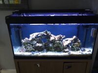 Fish tank-aquarium 220Ltr