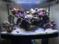 Premium live rock - marine aquarium