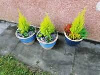 Plant pots , planters, garden , driveways ?