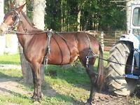 Don't miss out on the  opportunity to own this Jenny mule