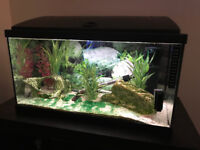 tropical/cold water fish tank.