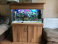 175 litre freshwater/ tropical fish tank with two filters, fitted cupboard and tank decorations