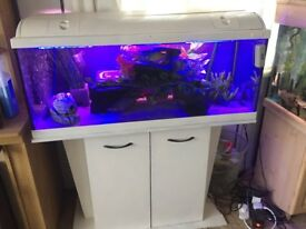 Large fish tank good condition