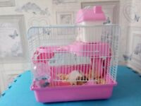 Male Syrian hamster OLDHAM