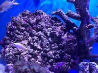 Marine live rocks corals for salt water aquarium Leicester