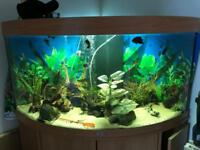 Juwel Trigon 350 and Fish