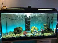 90 litre fish tank full setup