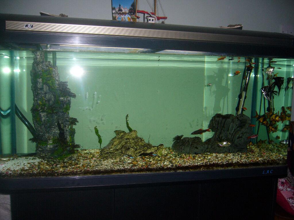Aquarium fish tank for sale in london - Aquarium Fish Tank For Sale In London
