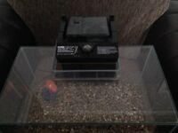 Fluval Edge 23l Micro Tank