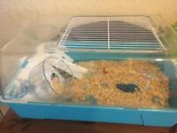 Cage with black hamster