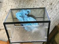 Free fish tank with stones