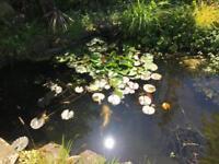 Pond supplies plants rocks fish preformed ponds waterfalls