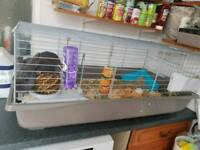 Rabbit with cage 100cm long with food