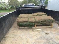 Sod for Sale (Approx 135 sq ft) $30 Firm!