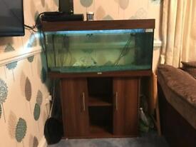 Juwel 180 fish tank
