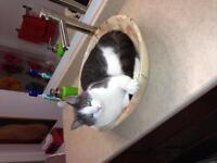 Missing Cat Spruce Hill Road Area CBS