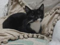 Meet Skittle 4 month Bengal X