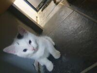 Kittens for new homes