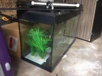 Fluva Roma Aquarium With Cabinet Bundled With Everything In The Photos