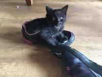 One little black kitten left in need of forever home