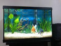 Marina LED Aquarium, 20 gallon
