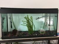 Juwel 260L fish tank with filter and pebbles