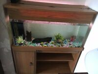 Fish tank unit with tropical fish