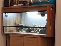 3ft vivarium full set up