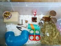 Friendly Hamster For Rehoming