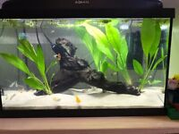Excellent 45L Fish Tank