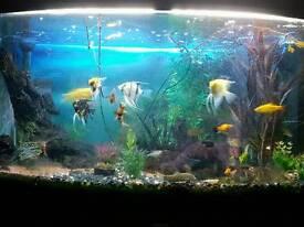 Tropical aquarium £200 ono