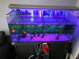 4ft fish tank with stand and lights
