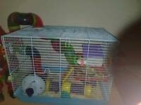 2 dwarf hamsters including cage and accessories
