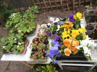 Garden Sale of Plants' and Shrub's. in Sheldon, B33 area