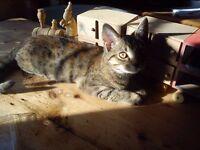 Beautiful young tabby cat