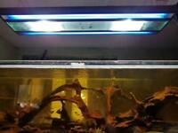 Suspended metal halide and blue aquarium light unit - new