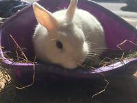 Bonded girl bunnies