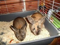 two male rabbits