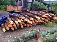 European larch strainers 8ft