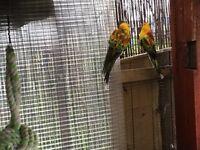 3 birds for sale
