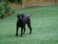 Artificial Turf Dog Runs, Dog Proof Lawns, fully installed
