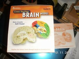 Learning Resources, Brain model