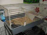 MALE GUINEA PIG COMPLETE WITH CAGE
