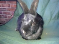 FRIENDLY MALE RABBIT ABOUT 3 MONTHS