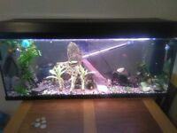 3ft fish tank with 30+ tropical fish