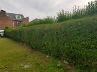 FREE Garden Hedge. Available Now