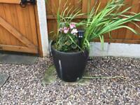 4 big plant pots