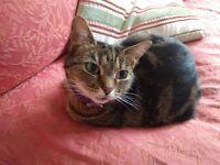 Shy Cat needing a quiet home